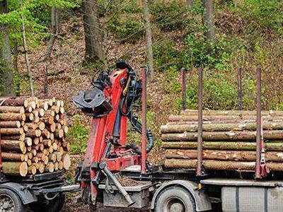 bale drewna 2