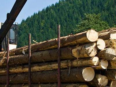 bale drewna 3