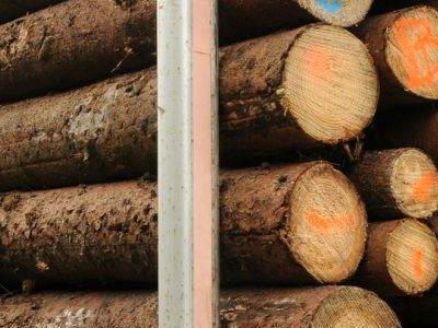 bale drewna 6